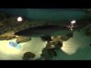 Акула кукулулула 2