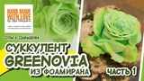 МК Суккулент Greenovia из фоамирана/ Часть 1/ О. Давыдова