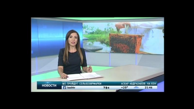 В Башкортостане пчеловод изобрел метод увеличения производительности маточного молочка