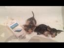 мытищинские коти 2