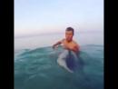 Египетские акулы видели многое, но русских с криками- Вау! Дельфины боятся до сих пор...