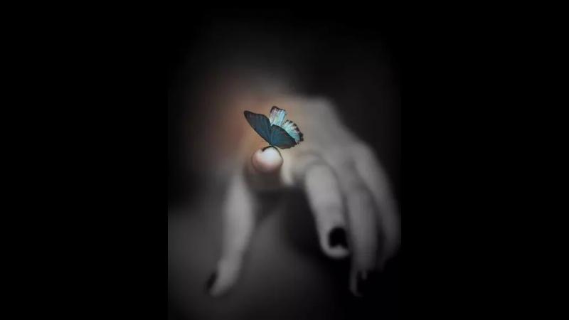 L.A.N Papillon