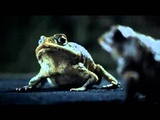 Ford Advert - Ralph &amp Les the Cane Toads