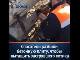 Спасатели разбили бетонную плиту, чтобы вытащить застрявшего котика