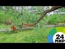 Четыре человека пострадали от поваленных в Москве деревьев - МИР 24