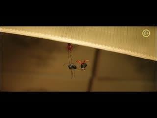 Букашки 2 (тизер-трейлер)