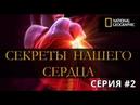 Секреты Нашего Сердца - Искра жизни / Документальный / National Geographic