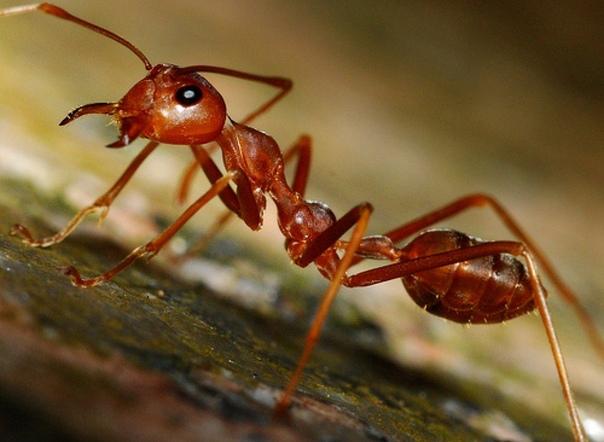Как избавиться от муравье