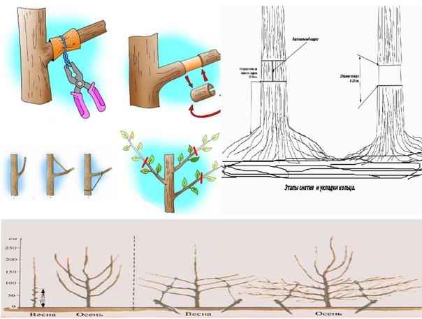 8 ЖЕСТКИХ СПОСОБОВ ЗАСТАВИТЬ САД ПЛОДОНОСИТЬ в арсенале у садоводов есть несколько способов заставить деревья плодоносить. Правда, они не гуманные, но если деревьям уже много лет, а плодов нет,