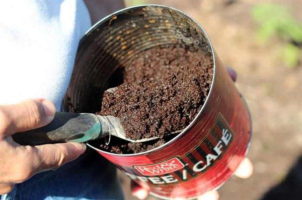 Молотый кофе удобрит землю и отпугнёт насекомых. Когда растение минует фазу прорастания, посыпьте почву кофейным