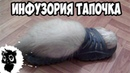 Сильные приколы с котами Черный кот