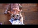 Смешные Коты и Кошки 2018 Приколы с Котами и другими Животными 2018 Приколы про Котов 86