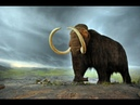 Woolly Mammoth The Autopsy
