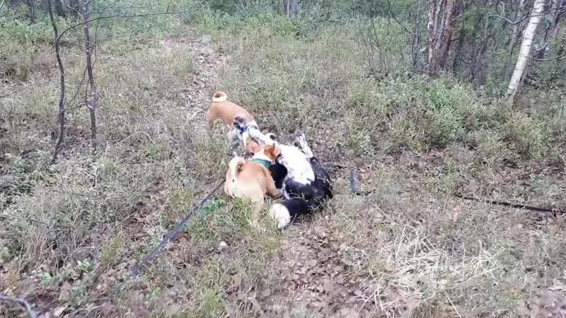 Охотники)