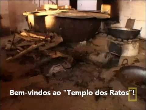 O Templo Sagrado dos Ratos - Legendado