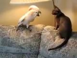 Попугай сказал коту, это мой диван