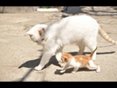 Kittens Talking and Playing with their Moms Compilation