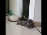 Кот-пофигист мой кумир