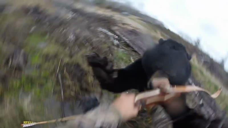 Нападение медведя. г. Херст, Канада
