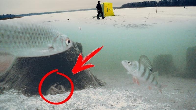 КТО ПРЯЧЕТСЯ В ПОДВОДНОМ ЛЕСУ Зимняя рыбалка в палатке! Ловля окуня и плотвы на мормышку