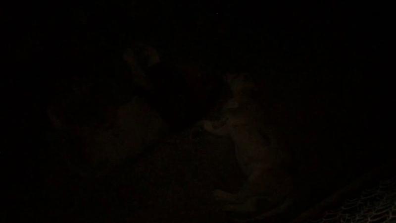 Прайд львов спит ночью Тайган