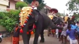 Moment man is kicked in the CHEST and thrown to ground by captive elephant