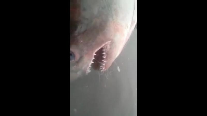 Акула на Каме 🦈😲 Елабуга