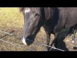 Мое первое знакомство с лошадками в Исландии