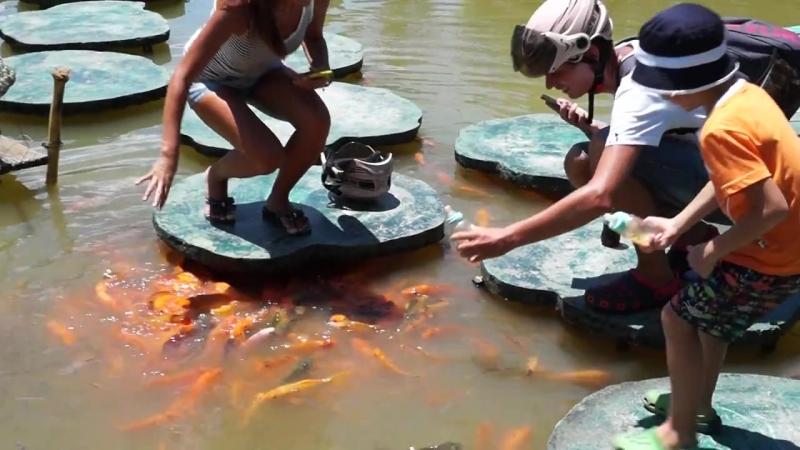 Кормление рыбок в Янг Бей во Вьетнаме