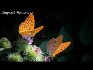 🔹Обнуление контрактов с природой планеты-ченнелинг