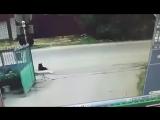 Водитель Nissan хладнокровно застрелил бездомную собаку