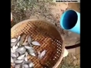 Уникальная рыболовная снасть