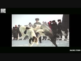 Клип Т.И. под песню Жанар Дугалова