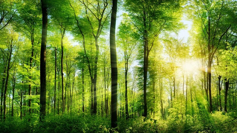красиво, лес, солнечный свет