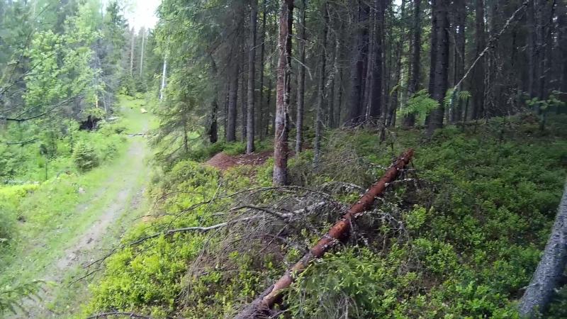 Партизаны в ДРЕМУЧЕМ лесу