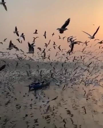 Birdfest on the river, New Delhi, India.