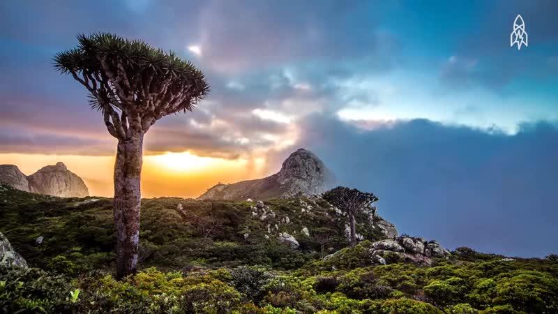 Драконовое дерево. Тенерифе