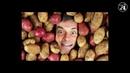 ПАСЛЁНОВЫЕ (Картофель, помидоры, перец...). Кто убивает твой мозг. Tyler Durden