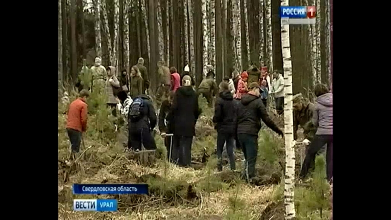 Молодежка ОНФ Свердловской области на Всероссийском дне посадки леса
