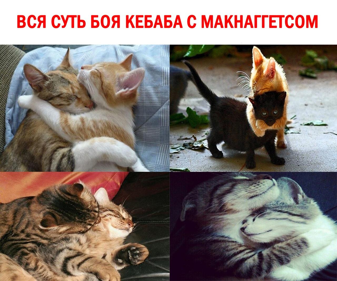 [Изображение: 0DfKPRyp_CA.jpg]