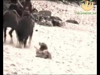 Я с вами на лошадке или не, просто на песочке полежу