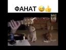 собачий фанат