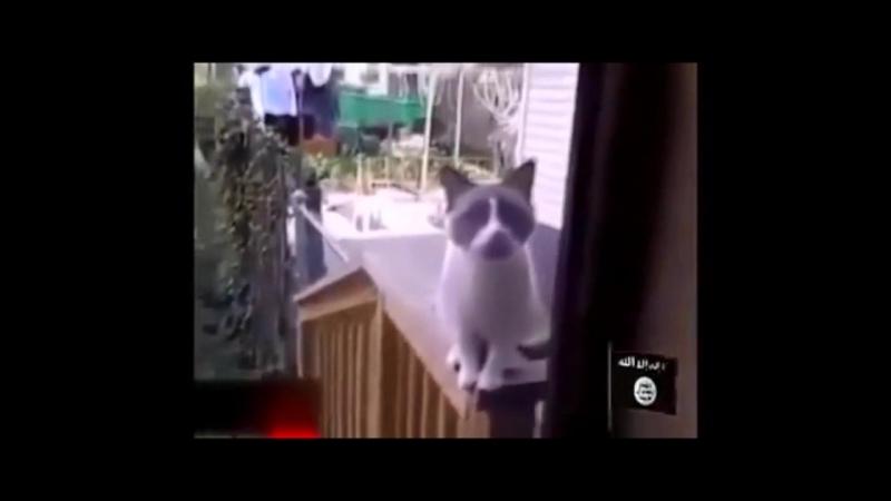 Кот шахид