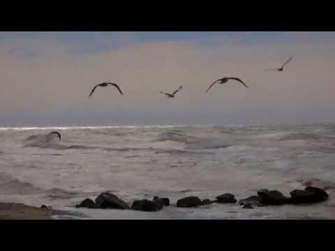 Blue Guitars of Picasso Lonely Beach Cut DJ Maretimo