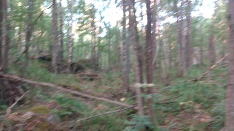 Ходоки по лесу