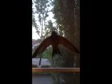 Беззубик хочет в небо