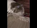 Фрося - кот в мешке