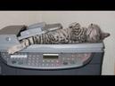 【面白い動画】 かわいい猫 - かわいい犬 - 最も面白いペットの動画 212