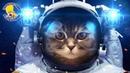 Лунный кот. Сказки на ночь, это круто. Приколы про котов. Фантастика. Усатый Нянь