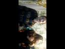Daca party